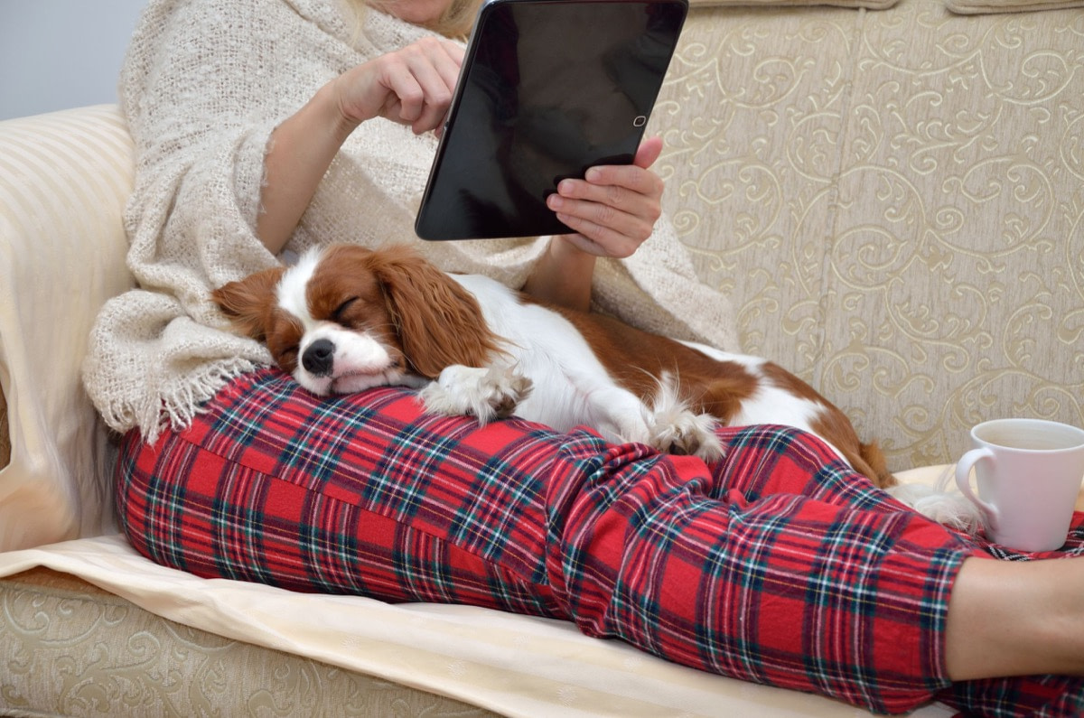 Woman in cozy home wear relaxing on sofa with a sleeping cavalier dog on her lap, holding tablet and reading; online accessibility concept